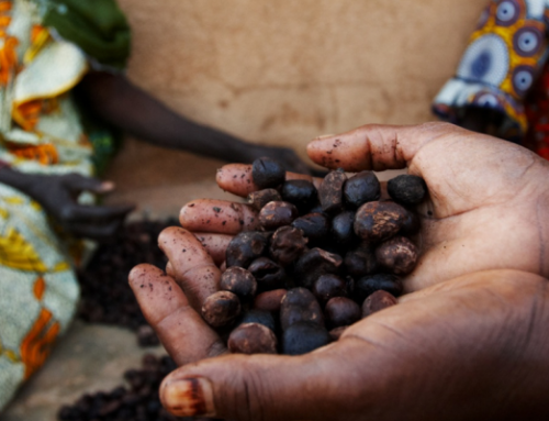 Support to Agricultural Value Chain Actors for Promoting Quality and Improving the Competitiveness of Togo