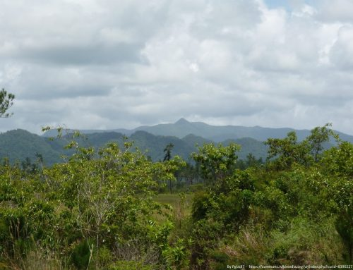 Revision of the Forests Act, Chapter 213, Substantive Laws of Belize, Revised Edition 2011