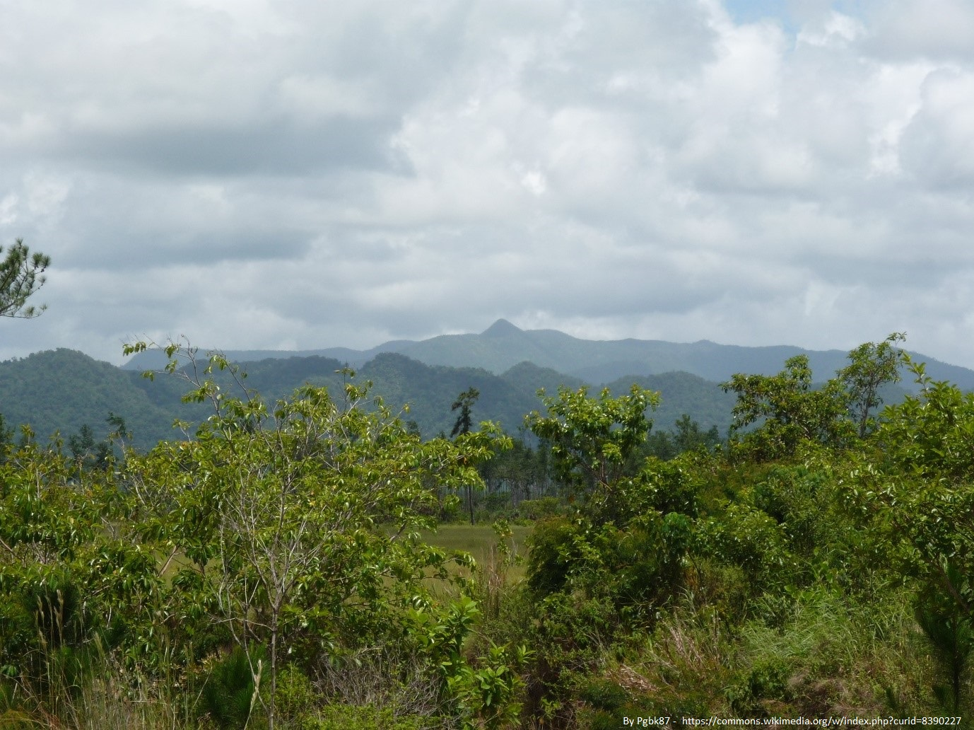 The Maya Mountains contain the majority of Belize's endemic plant species